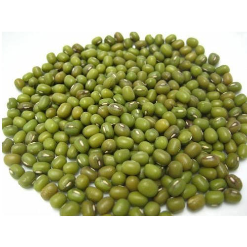 mung bean , ماش